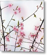 Spring Awakening Metal Print by Eena Bo