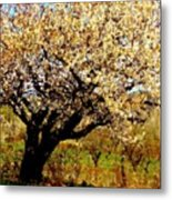 Spring Comes To The Old Cherry El Valle New Mexico Metal Print