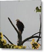 Spring Eagle II Metal Print