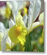 Spring Irises Flowers Art Prints Canvas Yellow White Iris Flowers Metal Print