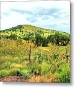Springerville Sunflowers 0060 Metal Print