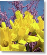 Springtime Yellow Daffodils Art Print Pink Blossoms Blue Sky Baslee Troutman Metal Print
