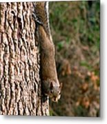 Squirrel 6 Metal Print