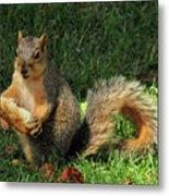 Squirrel Eating Pizza Metal Print
