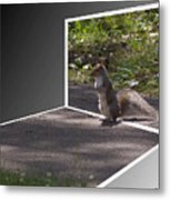 Squirrel World Metal Print