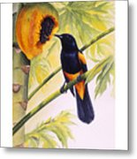 St. Lucia Oriole And Papaya Metal Print