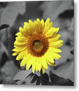 Star Of The Show - Standing Out Metal Print