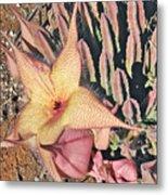 Starfish Cactus Metal Print