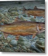 Steelhead Trout Fall Migration Metal Print