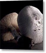 Still Life Two Mushrooms Metal Print