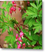String Of Bleeding Hearts Metal Print