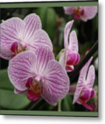 Striped Orchids With Border Metal Print