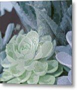 Succulents 2 Metal Print