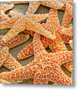 Sugar Starfish Metal Print