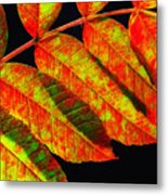 Sumac Leaves Metal Print