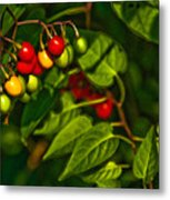 Summer Berries Metal Print