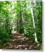 Summer In The Birch Grove Metal Print
