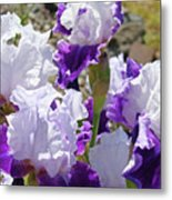Summer Iris Garden Art Print White Purple Irises Flowers Baslee Troutman Metal Print