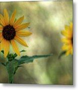 Summer Of Sunflowers  Metal Print