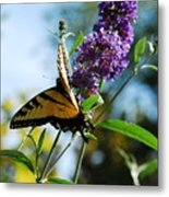 Summer Swallowtail Metal Print