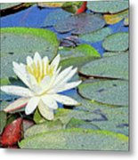 Summer Water Lily Metal Print