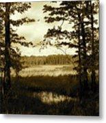 Summer Wetlands Metal Print