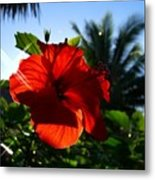 Sun And Flowers Metal Print