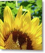 Sun Flower Floral Art Prints Sunflowers Summer Garden Metal Print