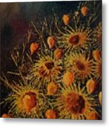 Sun Flowers And Physialis  Metal Print