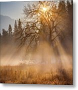 Sun Rays In Yosemite Ground Fog Metal Print