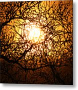 Sun Tree Metal Print