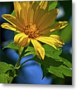 Sun Yellow Metal Print