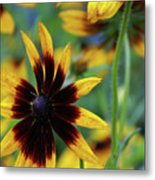 Sunburst Petals Metal Print