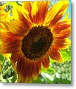 Sunflower 104 Metal Print