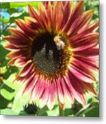 Sunflower 108 Metal Print