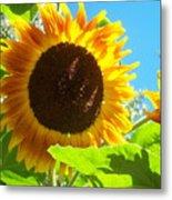 Sunflower 117 Metal Print