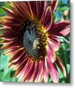 Sunflower 147 Metal Print