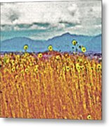 Sunflower Field 1 Metal Print