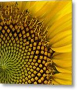 Sunflower Study Metal Print