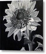 Sunflower Sutra Metal Print