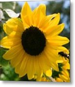 Sunflower With Bee Metal Print
