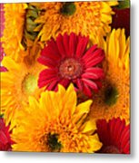 Sunflowers And Red Mums Metal Print by Garry Gay