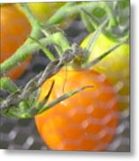 Sungold Tomatoes Metal Print