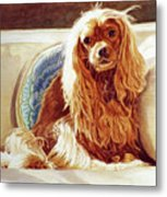 Sunlight On Cavalier King Charles Metal Print