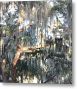 Sunlight On Mossy Tree Metal Print
