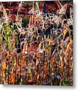 Sunlit Fall Corn Metal Print