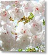 Sunlit Flowers Art Prints White Tree Blossoms Baslee Troutman Metal Print