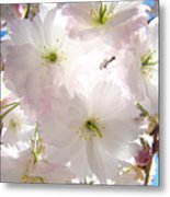 Sunlit Pink Blossoms Art Print Spring Tree Blossom Baslee Metal Print