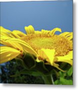 Sunny Summer Sunflowers Floral Art Baslee Troutman Metal Print