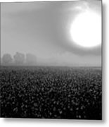Sunrise And The Cotton Field Bw Metal Print